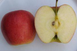 mela ambrosia
